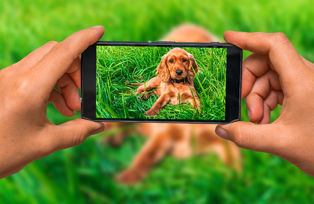 5 Ways That Can Help You Take Great Pictures of Your Dog