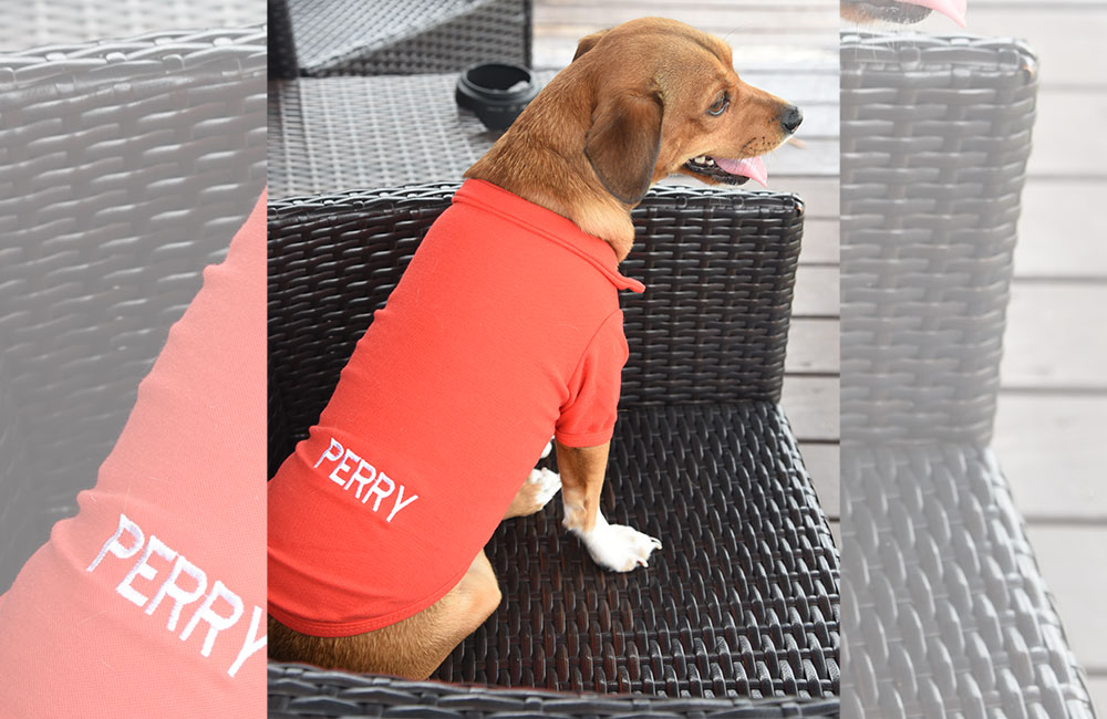 Trends That Are Ruling The Pet Apparel Industry