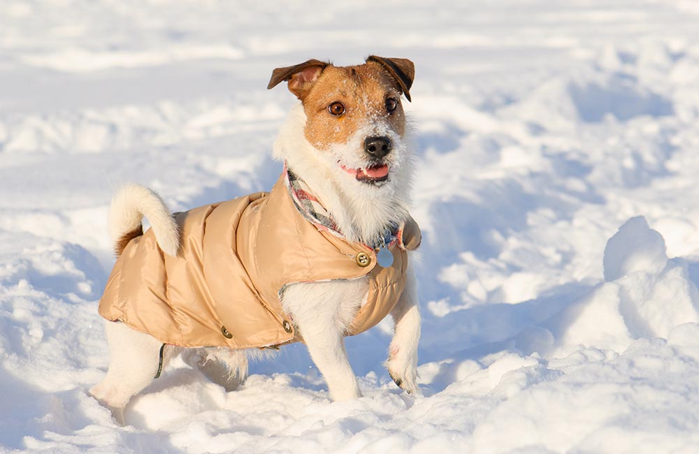 Five Ways To Help You Take Better Care Of Your Pets During Winters