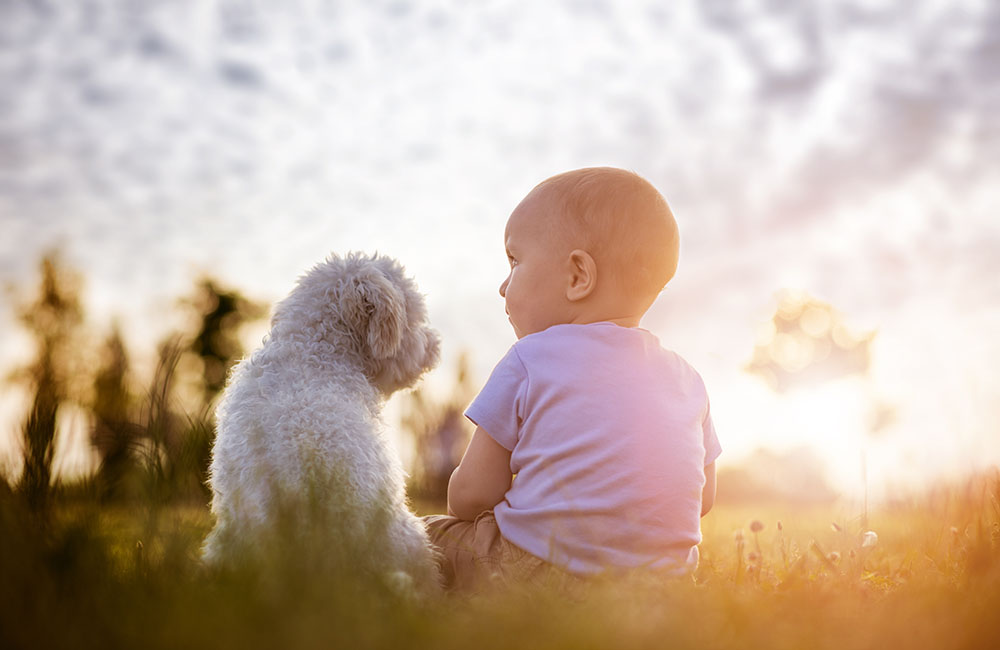 8 Helpful Ways To Introduce A Dog To A Baby